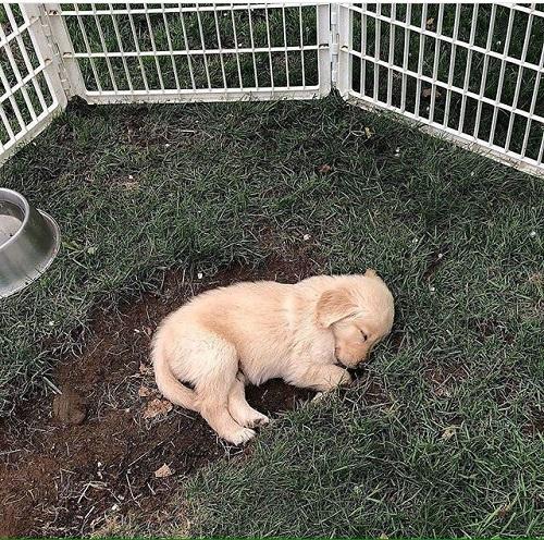 Woofland - Ο σκύλος μου κοιμάται - Αστείες φωτογραφίες σκύλων - Γουφαμάρες 1