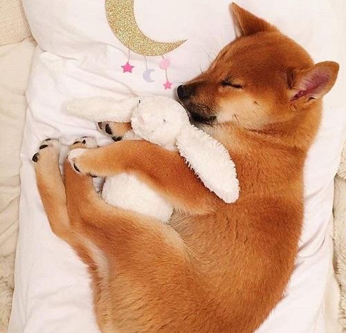 Woofland - Ο σκύλος μου κοιμάται - Αστείες φωτογραφίες σκύλων - Γουφαμάρες 5