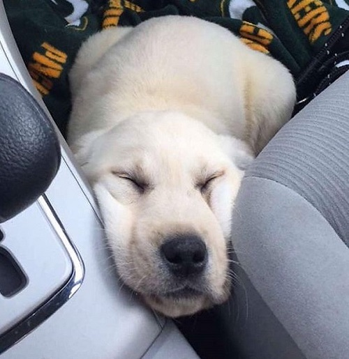 Woofland - Ο σκύλος μου κοιμάται - Αστείες φωτογραφίες σκύλων - Γουφαμάρες 6