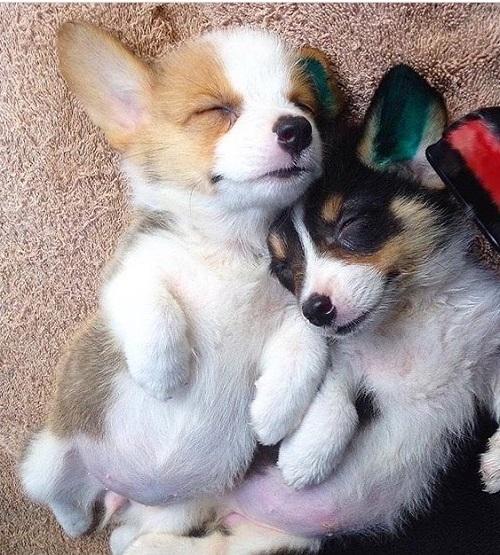 Woofland - Ο σκύλος μου κοιμάται - Αστείες φωτογραφίες σκύλων - Γουφαμάρες 7