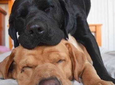 Ο σκύλος μου κοιμάται – Αστείες φωτογραφίες σκύλων Woofland