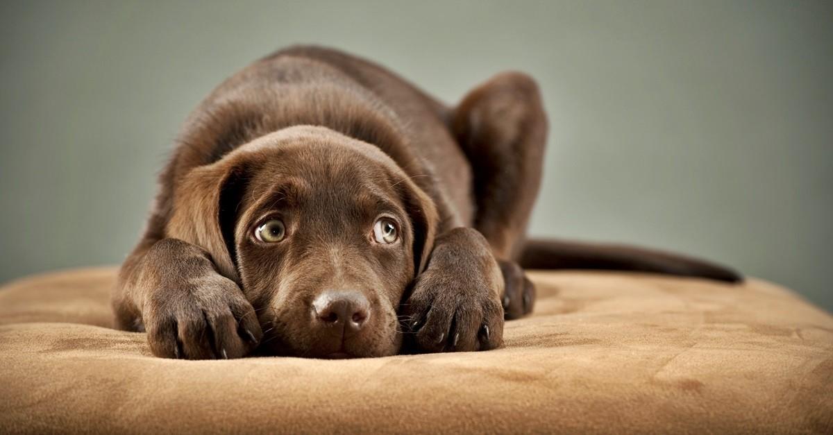 Πως διατηρώ το σκύλο μου ήρεμο σε έντονους θορύβους Woofland