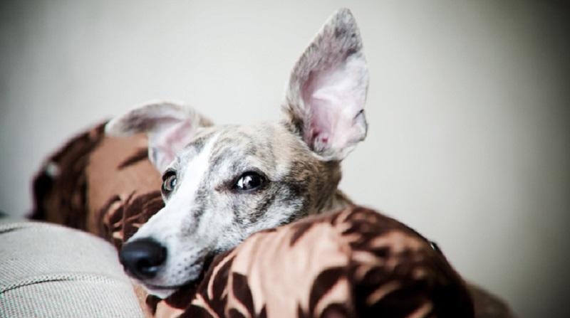 Πως ερμηνεύει ο σκύλος τα λόγια μας – Επιστήμη και ενημέρωση