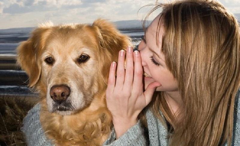 Woofland - Πως ερμηνεύει ο σκύλος τα λόγια μας - Επιστήμη και ενημέρωση