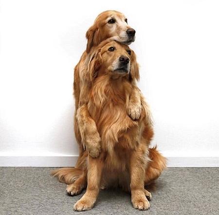 Woofland - Αστείες φωτογραφίες σκύλων που αγκαλιάζονται - Γουφαμάρες 3