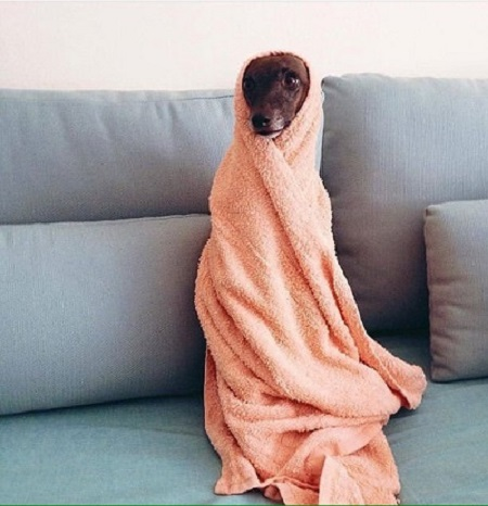 Woofland - Σκύλοι μετά το μπάνιο - Αστείες φωτογραφίες σκύλων - Γουφαμάρες 1