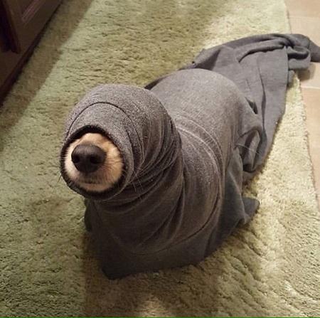 Woofland - Σκύλοι μετά το μπάνιο - Αστείες φωτογραφίες σκύλων - Γουφαμάρες 3