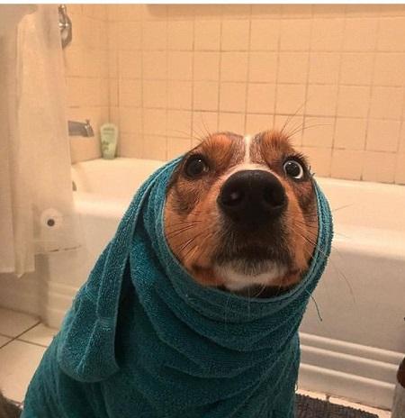 Woofland - Σκύλοι μετά το μπάνιο - Αστείες φωτογραφίες σκύλων - Γουφαμάρες