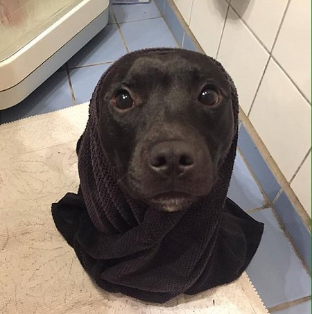 Woofland - Σκύλοι μετά το μπάνιο - Αστείες φωτογραφίες σκύλων - Γουφαμάρες 5