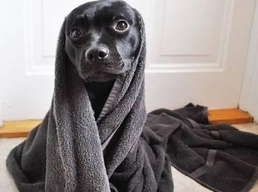 Αστείες φωτογραφίες σκύλων μετά το μπάνιο – Γουφαμάρες