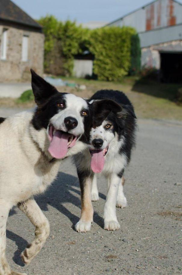 Woofland - Σκύλοι που καταστρέφουν τις φωτογραφίες - Γουφαμάρες 1