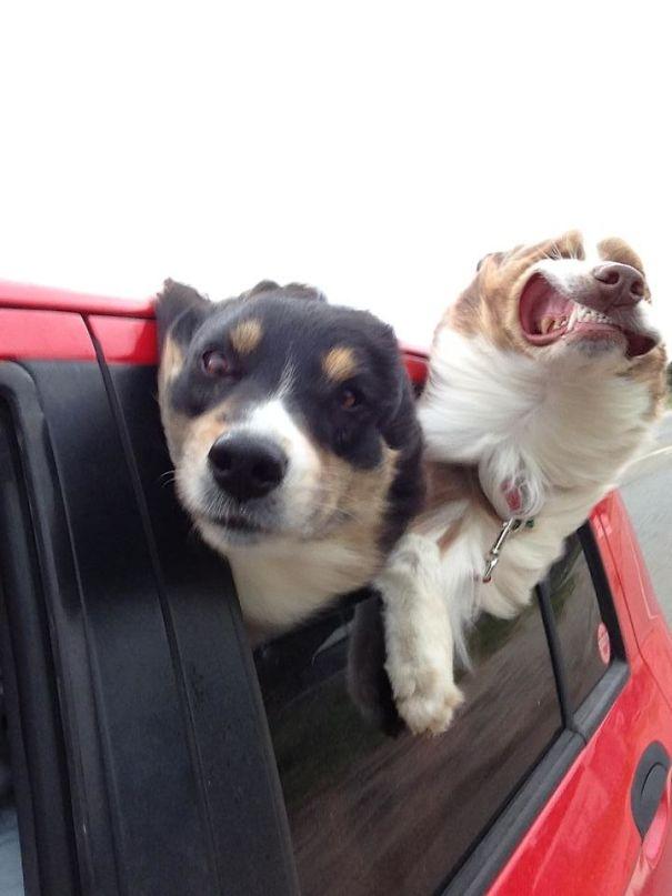 Woofland - Σκύλοι που καταστρέφουν τις φωτογραφίες - Γουφαμάρες 2