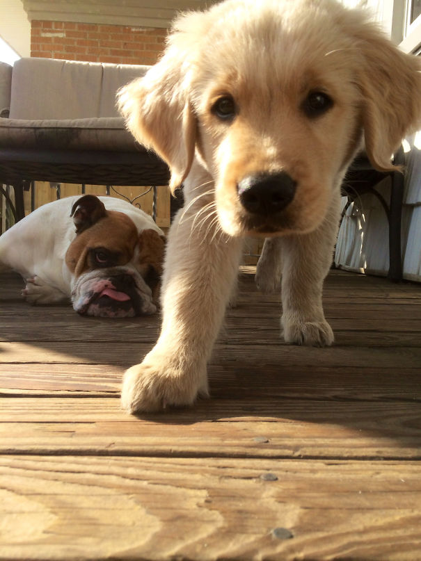 Woofland - Σκύλοι που καταστρέφουν τις φωτογραφίες - Γουφαμάρες 6