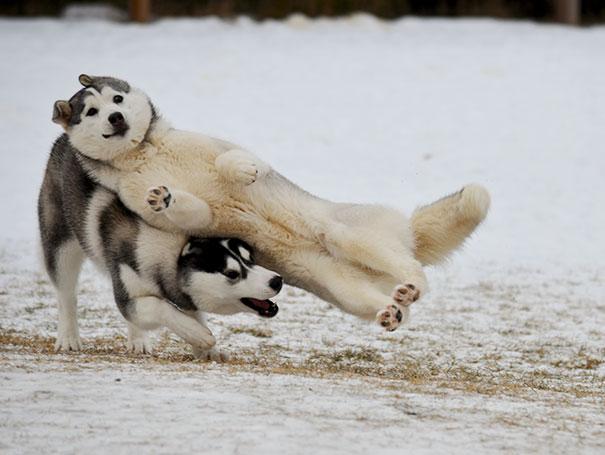 Woofland - Σκύλοι που καταστρέφουν τις φωτογραφίες - Γουφαμάρες 7