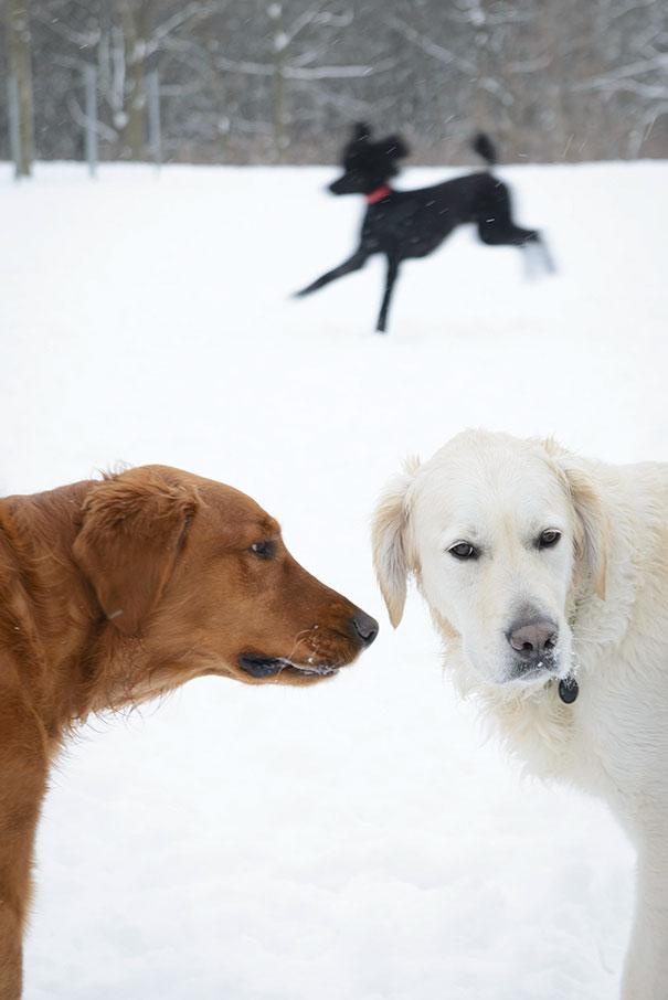 Woofland - Σκύλοι που καταστρέφουν τις φωτογραφίες - Γουφαμάρες 8