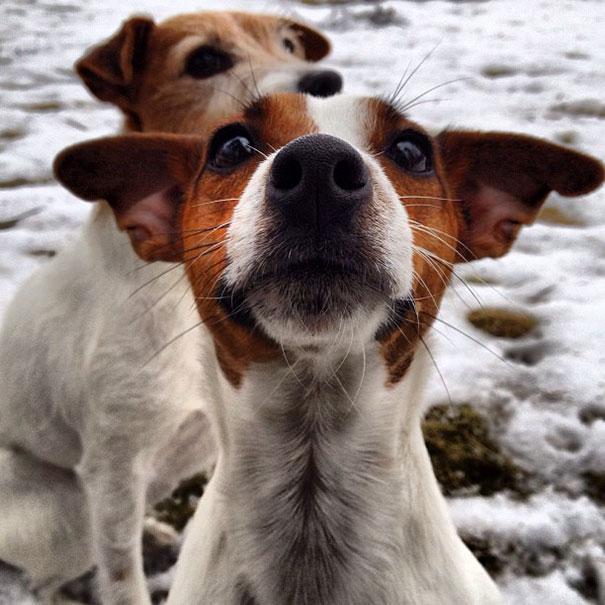 Woofland Σκύλοι που καταστρέφουν τις φωτογραφίες Γουφαμάρες