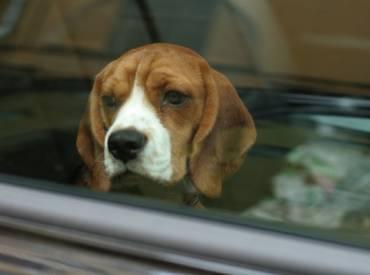 Σκύλος αυτοκίνητο και συμβουλές για ταξίδια – Woofland