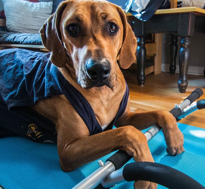 Woofland - Σκύλος και άσκηση - Αστείες φωτογραφίες σκύλων - Γουφαμάρες 3