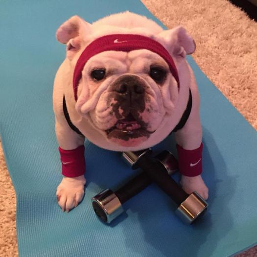 Woofland - Σκύλος και άσκηση - Αστείες φωτογραφίες σκύλων - Γουφαμάρες 4