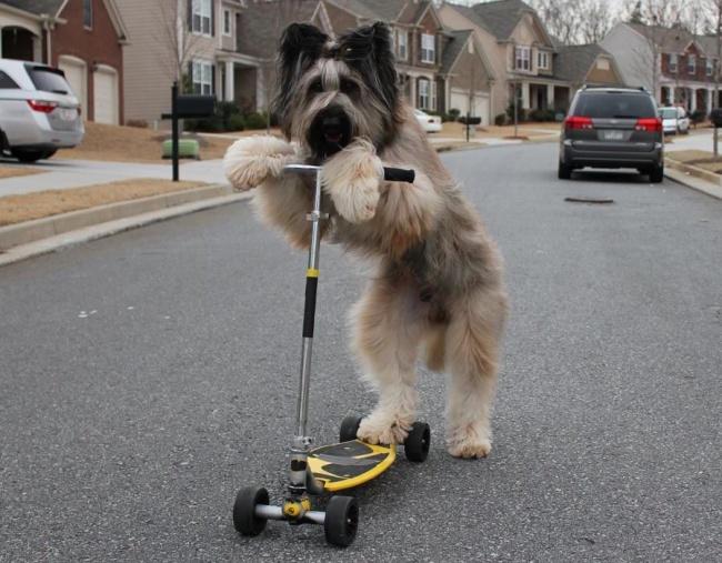 Woofland - Σκύλος και άσκηση - Αστείες φωτογραφίες σκύλων - Γουφαμάρες 5
