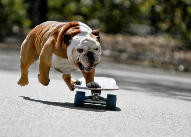 Woofland - Σκύλος και άσκηση - Αστείες φωτογραφίες σκύλων - Γουφαμάρες 6