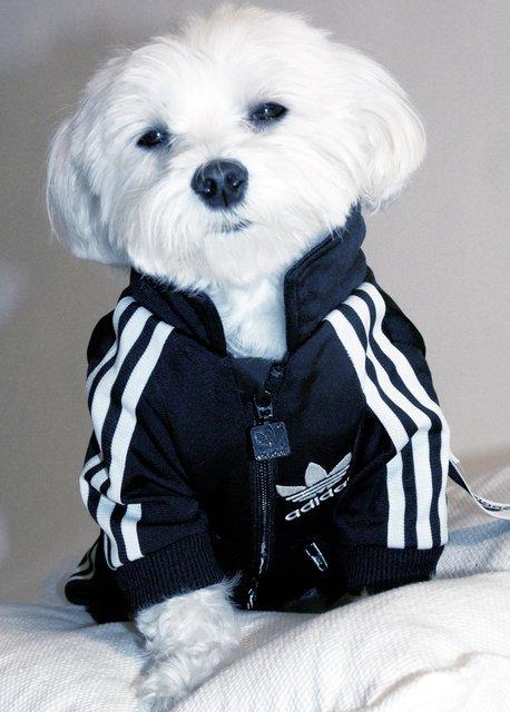 Woofland - Σκύλος και άσκηση - Αστείες φωτογραφίες σκύλων - Γουφαμάρες 8