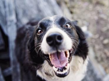 Σκύλος και άσχημη αναπνοή Φροντίδα και υγεία σκύλου