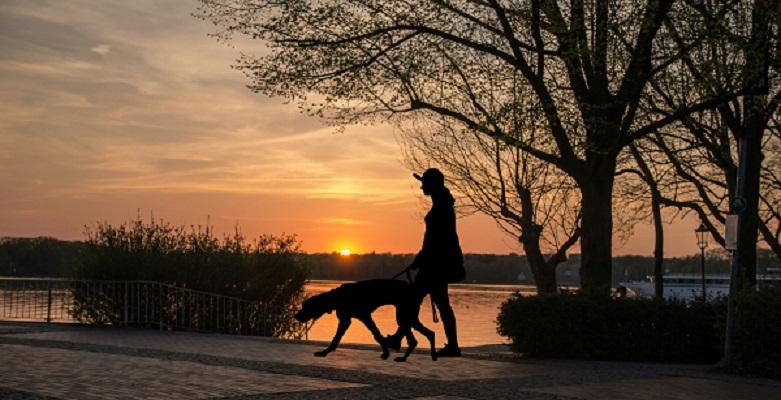 Σκύλος και βόλτα στο σκοτάδι τι να προσέξω – Woofland