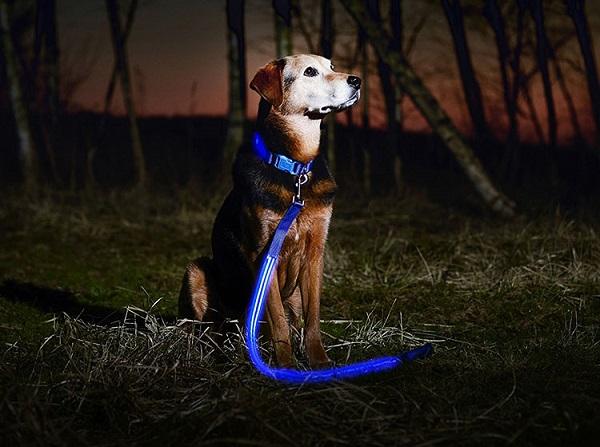 Woofland - Σκύλος και βόλτα στο σκοτάδι τι να προσέξω - Άνθρωπος και σκύλος