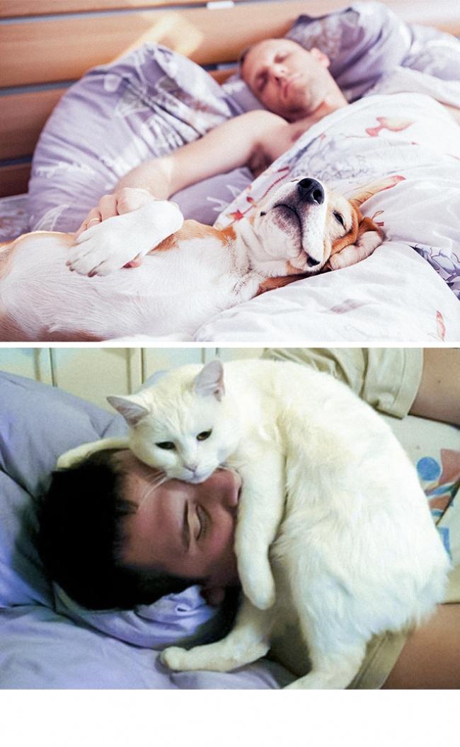Woofland - Σκύλος και γάτα - Γουφαμάρες - Αστείες φωτογραφίες σκύλων 1