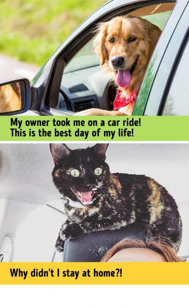 Woofland - Σκύλος και γάτα - Γουφαμάρες - Αστείες φωτογραφίες σκύλων 11
