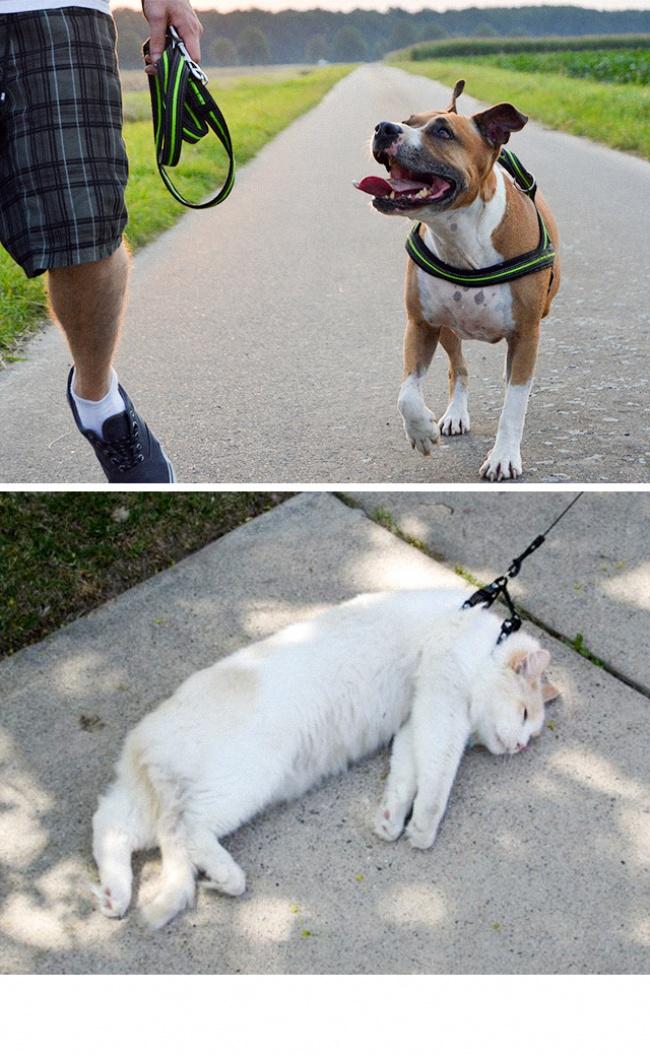 Woofland - Σκύλος και γάτα - Γουφαμάρες - Αστείες φωτογραφίες σκύλων 2