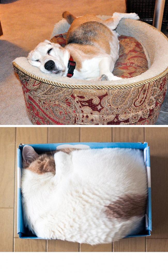 Woofland - Σκύλος και γάτα - Γουφαμάρες - Αστείες φωτογραφίες σκύλων 3