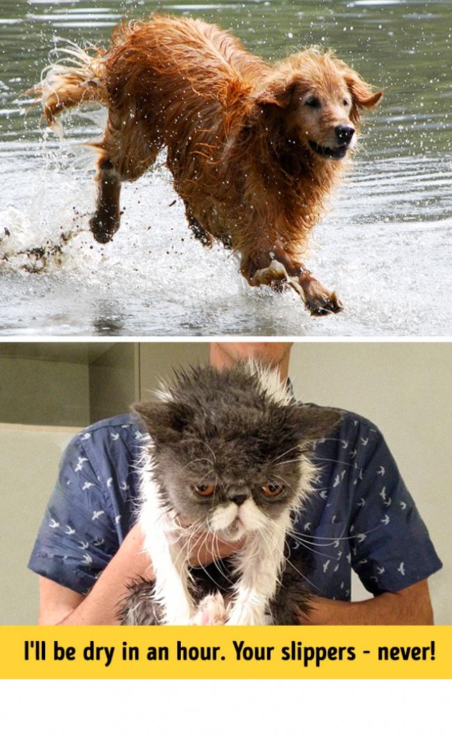Woofland - Σκύλος και γάτα - Γουφαμάρες - Αστείες φωτογραφίες σκύλων 4