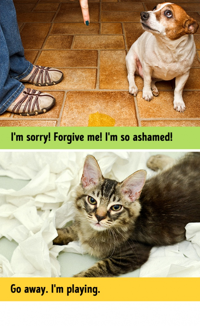 Woofland - Σκύλος και γάτα - Γουφαμάρες - Αστείες φωτογραφίες σκύλων  6