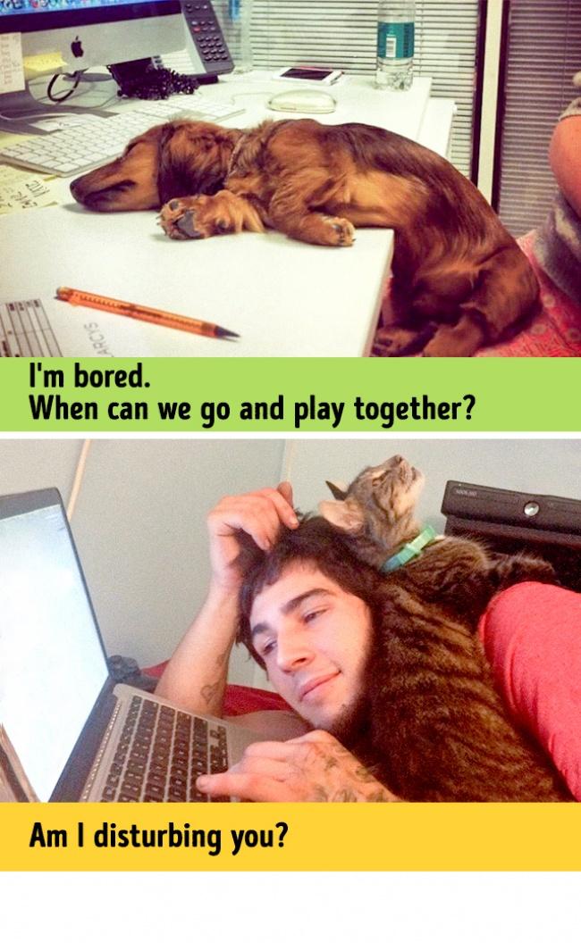 Woofland - Σκύλος και γάτα - Γουφαμάρες - Αστείες φωτογραφίες σκύλων 8