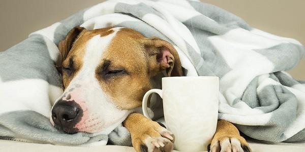 Woofland - Σκύλος και γρίπη - Φροντίδα και υγεία σκύλων