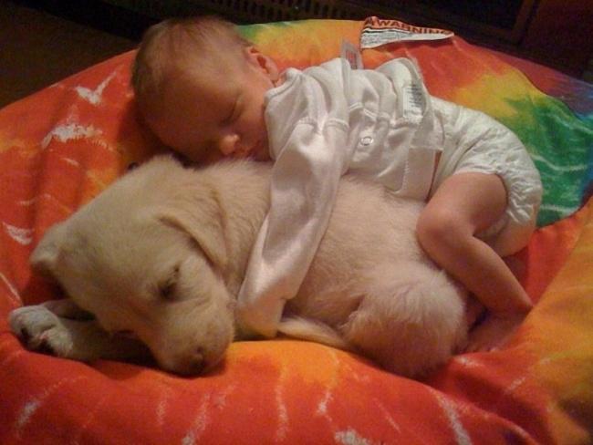 Woofland - Σκύλος και παιδιά - Αστείες φωτογραφίες - Γουφαμάρες 2