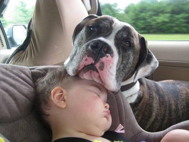 Woofland - Σκύλος και παιδιά - Αστείες φωτογραφίες - Γουφαμάρες 5