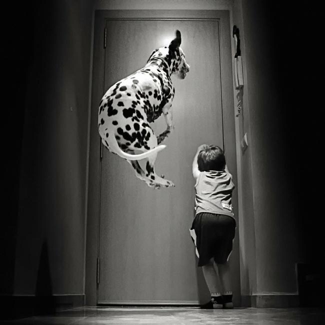 Σκύλος και παιδιά – Αστείες φωτογραφίες σκύλων – Γουφαμάρες