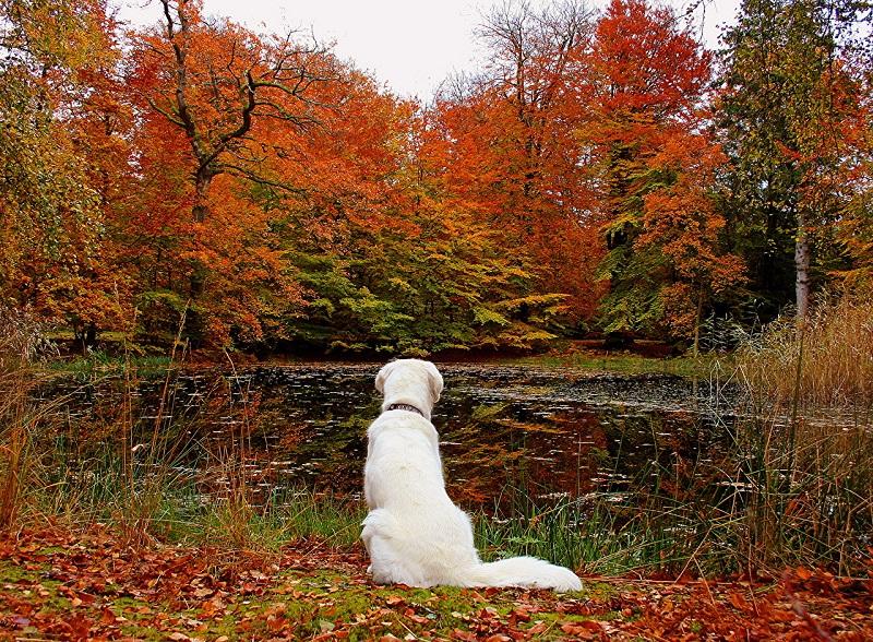 Woofland - Σκύλος και φθινόπωρο -Αστείες φωτογραφίες σκύλων - Γουφαμάρες 1