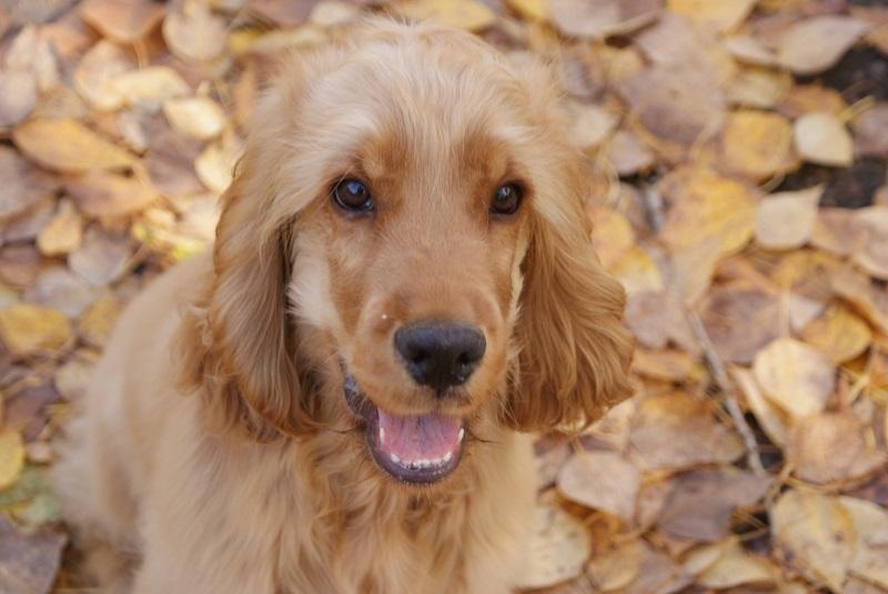 Woofland - Σκύλος και φθινόπωρο -Αστείες φωτογραφίες σκύλων - Γουφαμάρες 9
