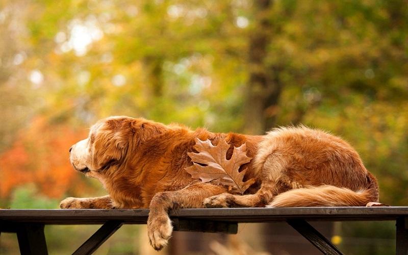 Woofland - Σκύλος και φθινόπωρο -Αστείες φωτογραφίες σκύλων - Γουφαμάρες 3