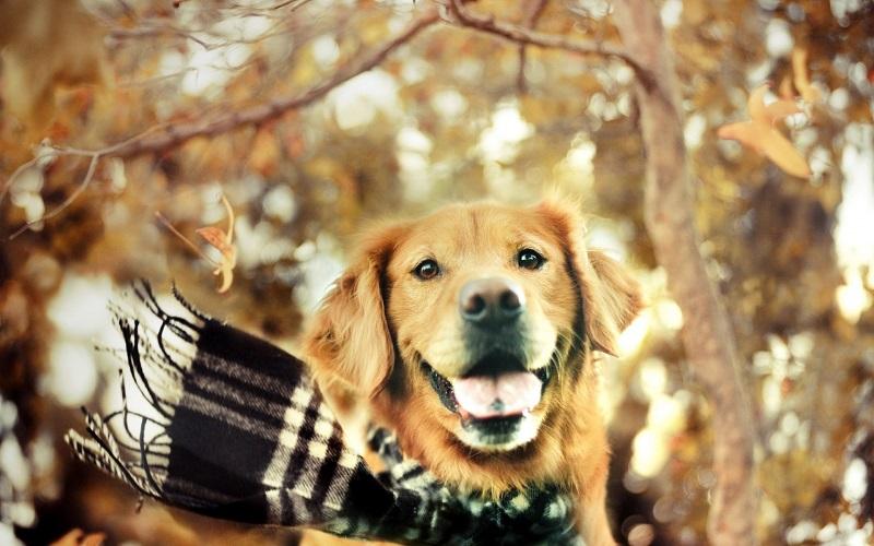Woofland - Σκύλος και φθινόπωρο -Αστείες φωτογραφίες σκύλων - Γουφαμάρες 4