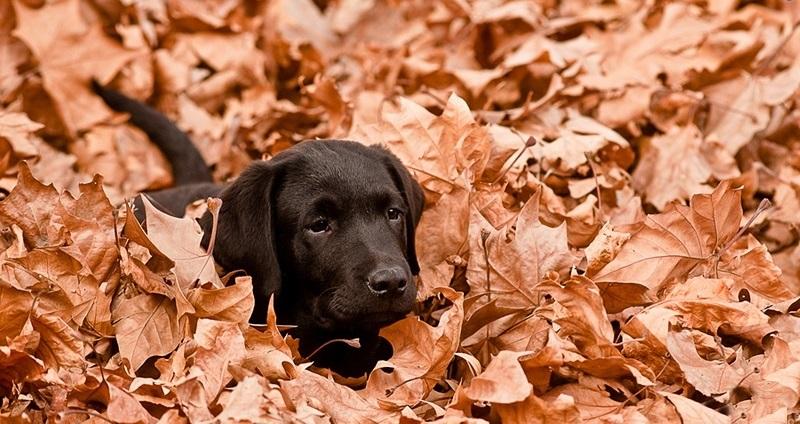 Woofland - Σκύλος και φθινόπωρο -Αστείες φωτογραφίες σκύλων - Γουφαμάρες 5