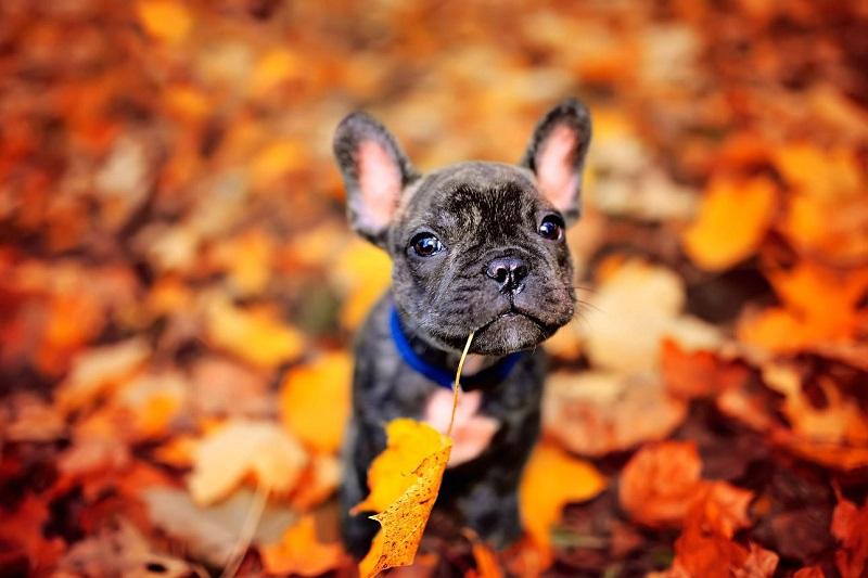 Woofland - Σκύλος και φθινόπωρο -Αστείες φωτογραφίες σκύλων - Γουφαμάρες 6