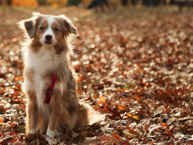 Woofland - Σκύλος και φθινόπωρο -Αστείες φωτογραφίες σκύλων - Γουφαμάρες 7