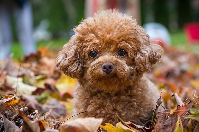 Woofland - Σκύλος και φθινόπωρο -Αστείες φωτογραφίες σκύλων - Γουφαμάρες 8