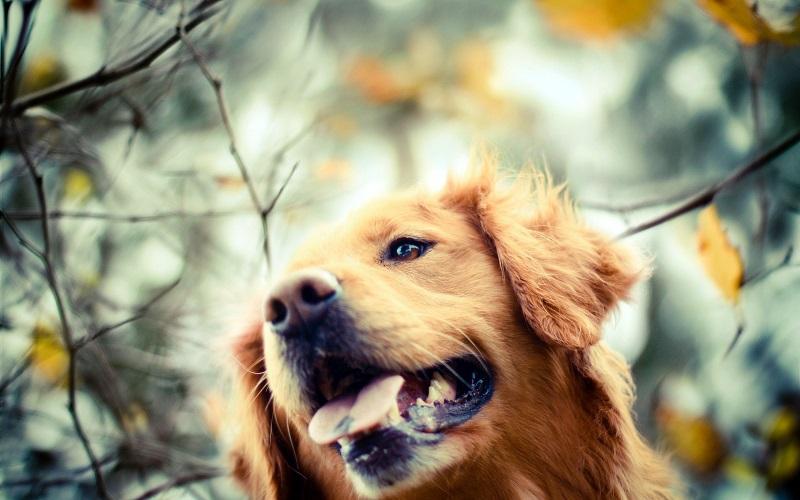 Σκύλος και φθινόπωρο – Αστείες φωτογραφίες σκύλων – Woofland