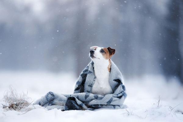 Σκύλος και χειμώνας – Φροντίδα και υγεία σκύλων Woofland